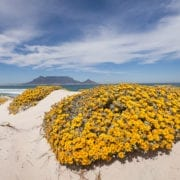 Where To See The Wild Flowers In Cape Town West Coast