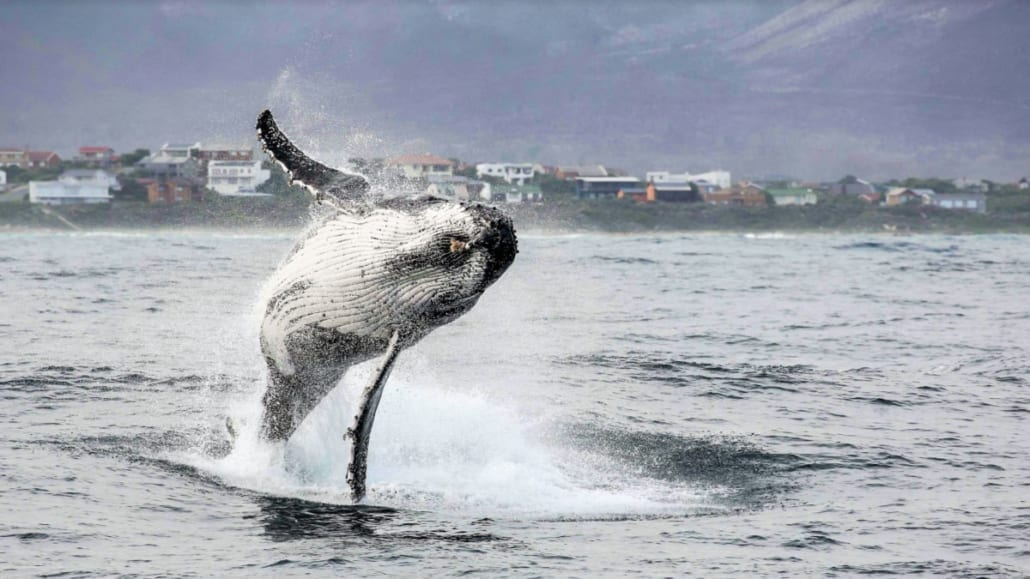 5 of the Best Ways to See Whales around Cape Town - Dyer Island -Cruises - 03