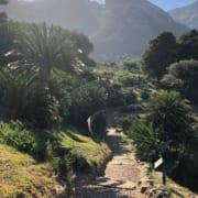 Top-5-Kirstenbosch-Cycad-Garden