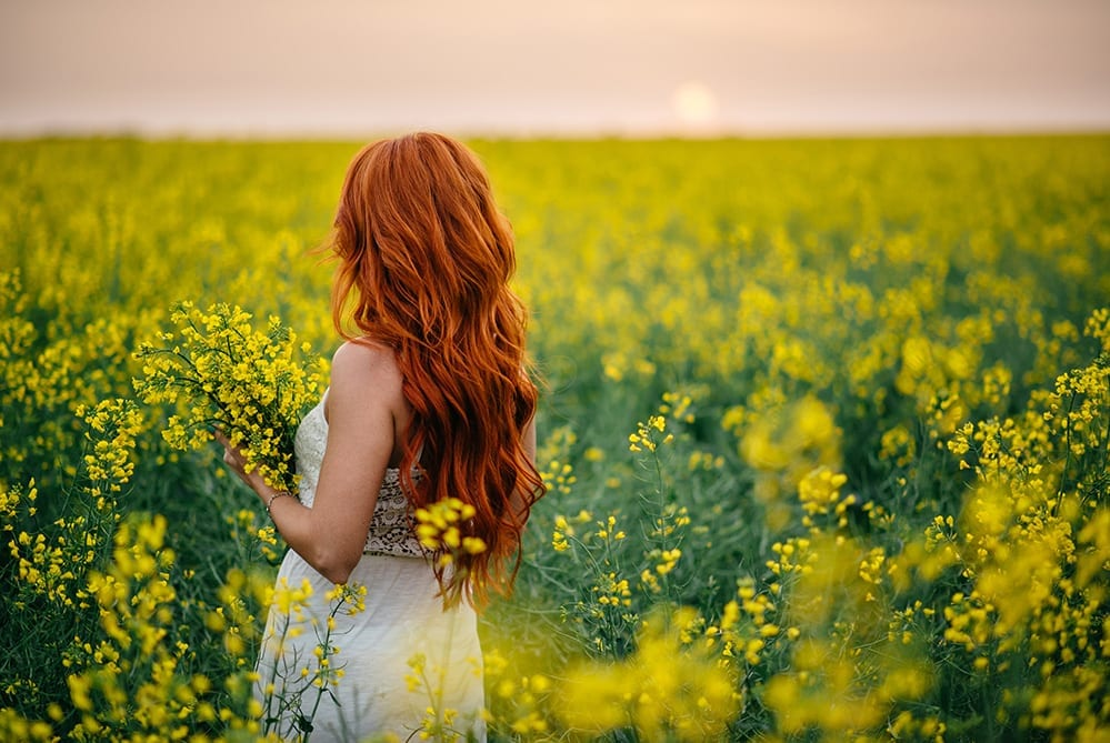 Where is the best place to find Canola Fields Western Cape Town Woman Canola Field