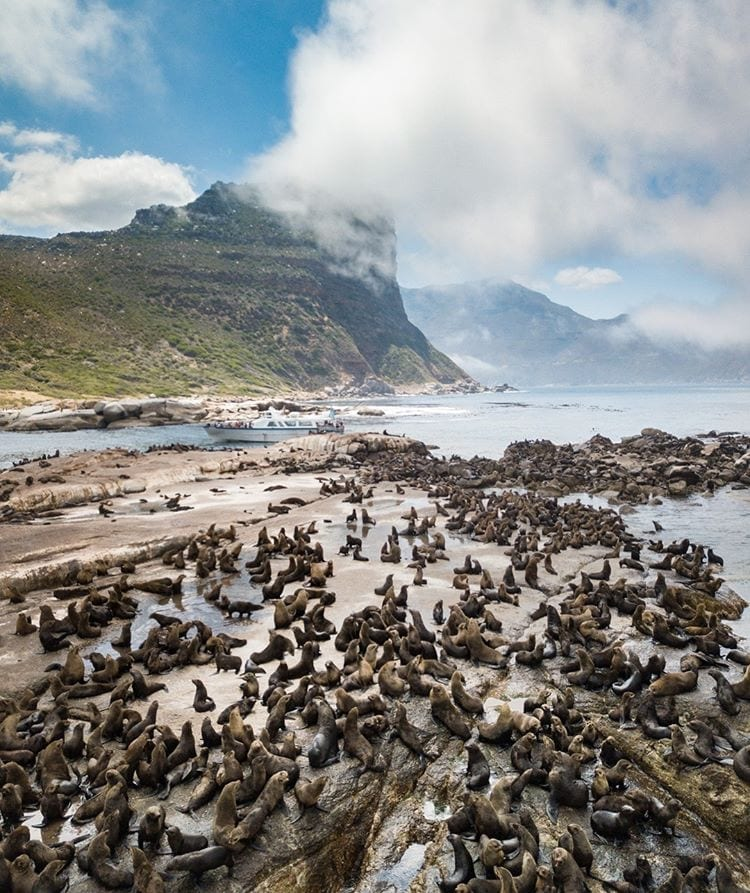Secret Cape Town's ultimate 7-day Cape Town Itinerary - Houtbay